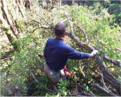 ウバメガシ伐採・山作業